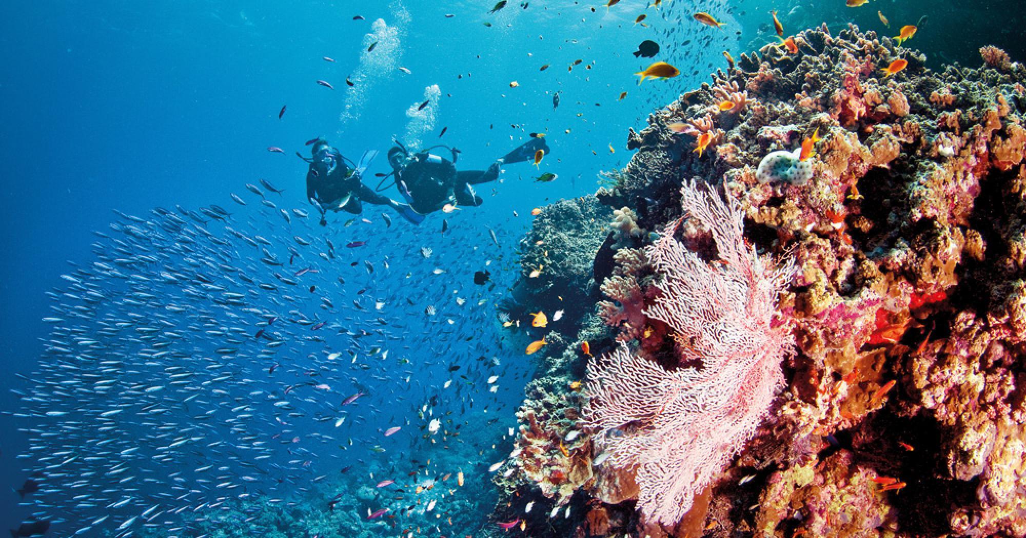 Great Barrier Reef | Bedarra Island Resort